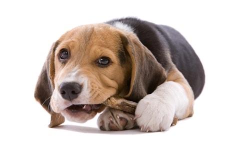 dog human vitamins