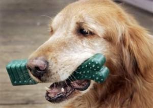 chewie for dog bad breath
