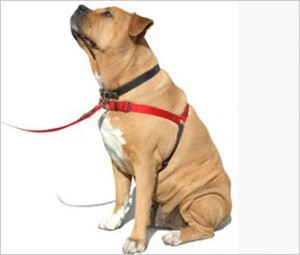 Dog Front-clip harness
