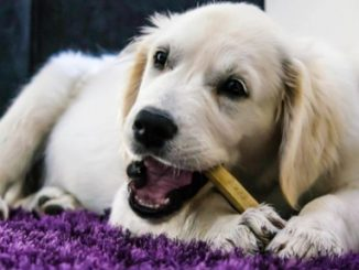good nutrition in puppies