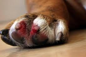 Dog Nail Bleeding Quick