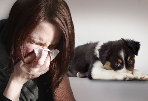 Allergy to dogs
