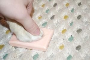 Soap for dog nail bleeding
