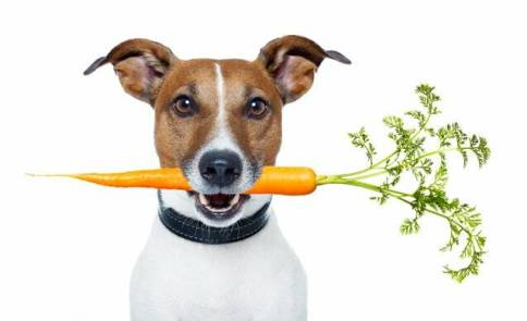 vegetables for dogs
