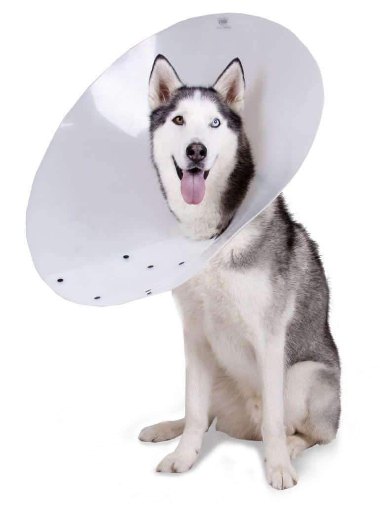 E collar for entropion in dogs