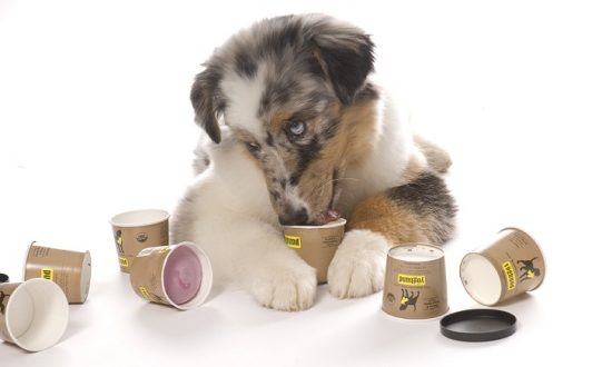 Yogurt for Dogs