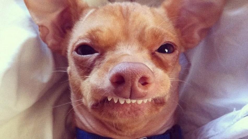 Dog Overbite