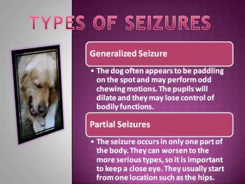 Types of Seizures in Dogs