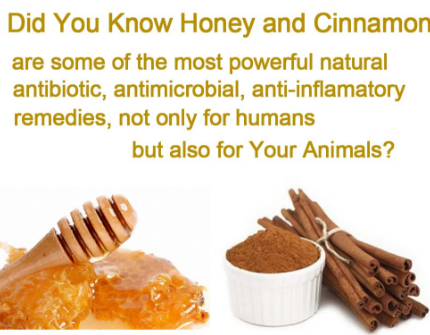 Honey for Dogs Remedies