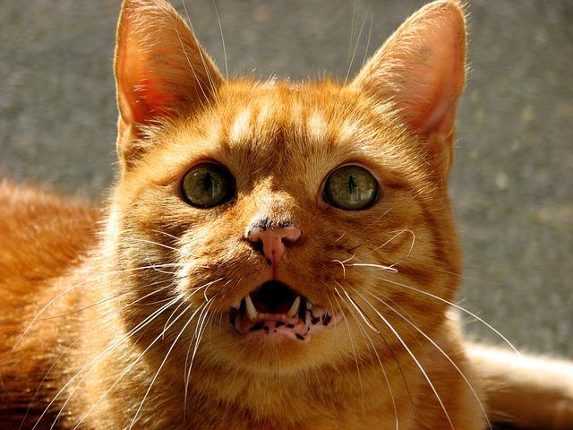 Cat Crying At Night