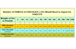 Why does chocolate kill dogs?