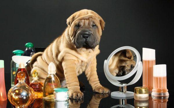 Best Dog Perfumes