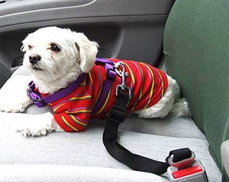 Seatbelt Leash control movement and protect him in case of an accident.