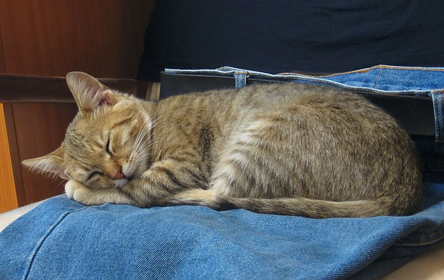 Cat sleeping - If you spot your cat dragging back legs, take her to the vet right away