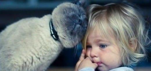 Cat head bunting owner
