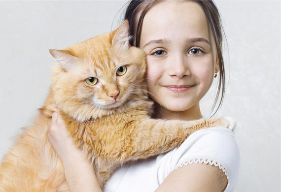 Cat Affection to their Owners