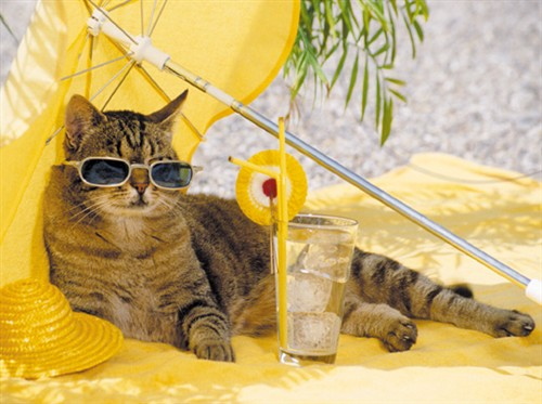 Sunscreen for Cats