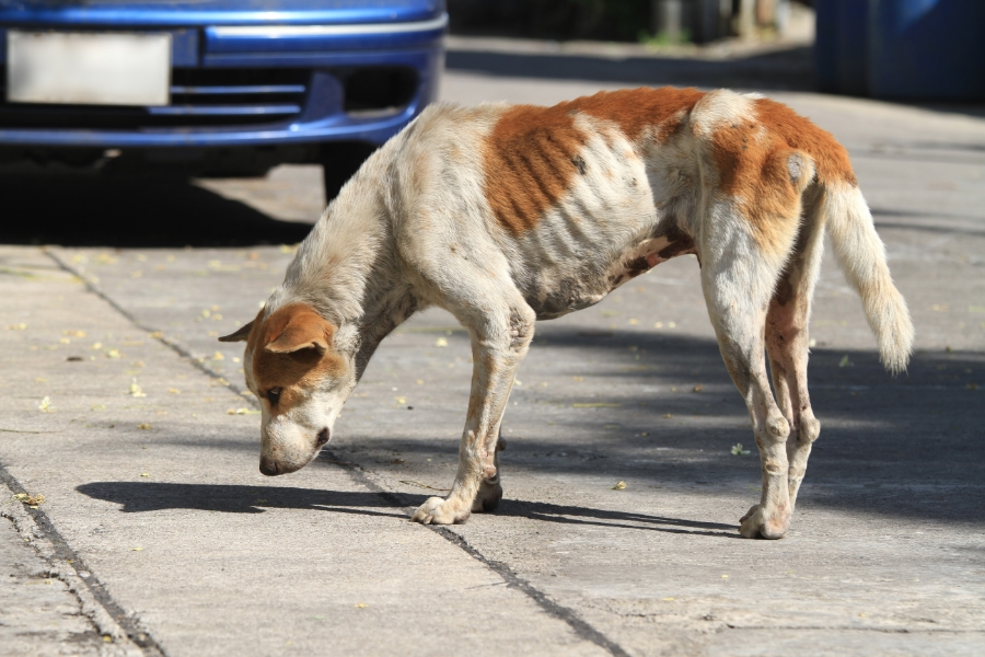 Dog losing weight but healthy