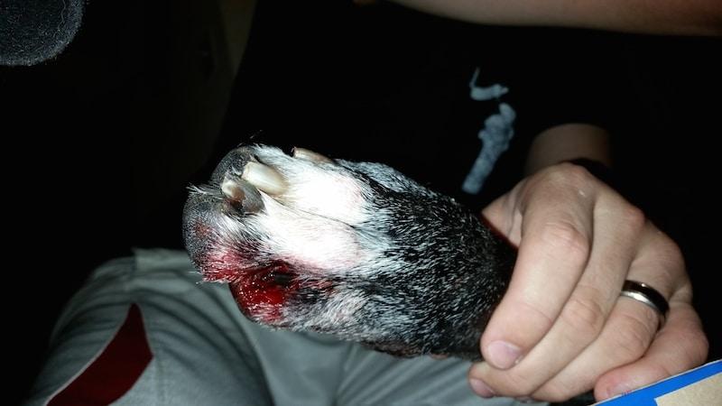 dog paws bleeding