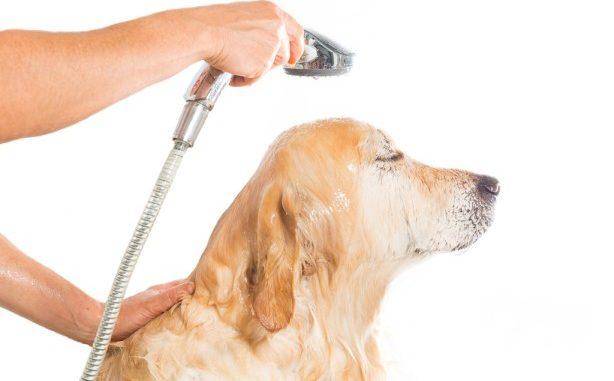 proper dog bath