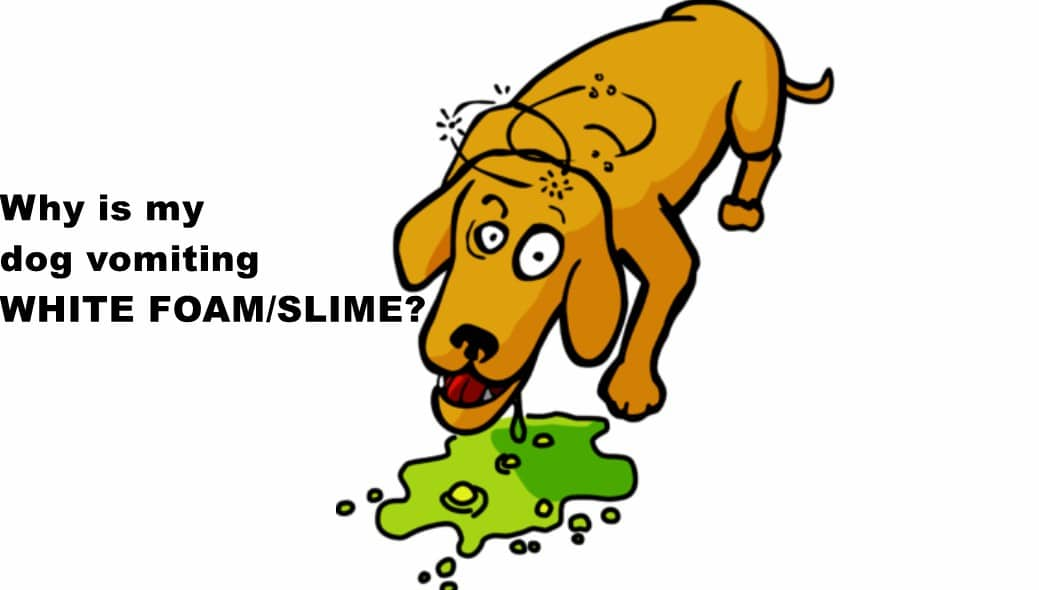 Dog Vomiting White Foam/Slime \u0026 Eating