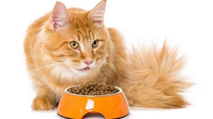 Cat won't eat dry food