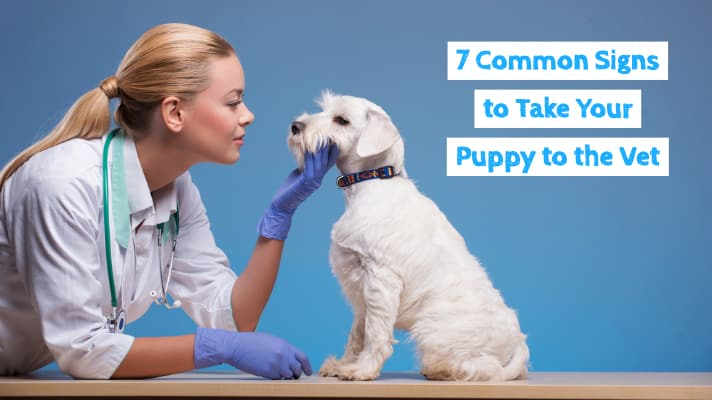 7 Common Signs to take your puppy to the vet