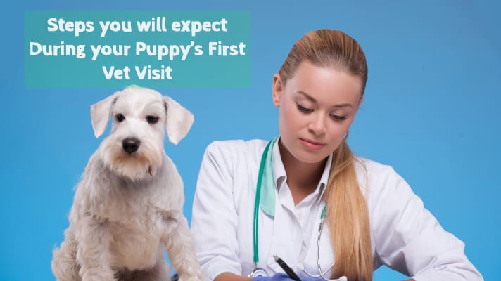 Steps you will expect During your Puppy's First Vet Visit
