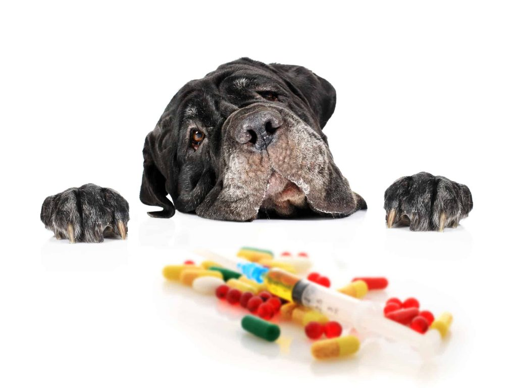 Supplement for Dog